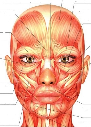 svaly obličeje