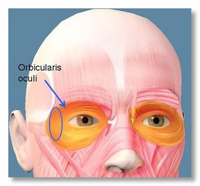 oční sval